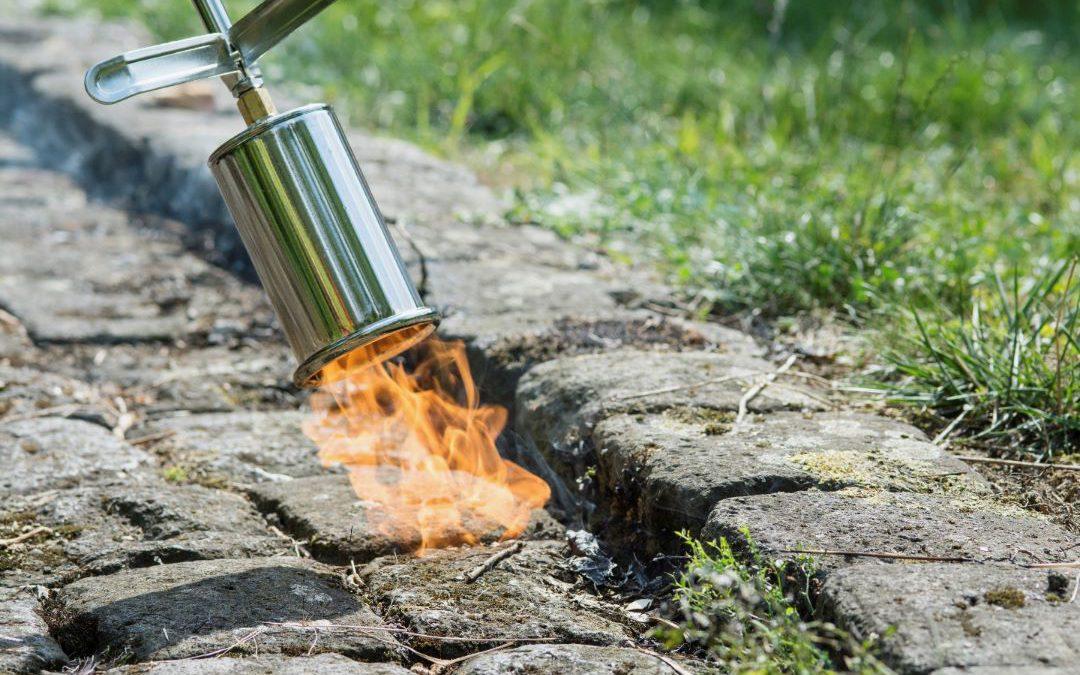 Wie heiße Hilfe Gärtnern gegen Unkraut hilft