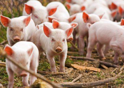 Tierfaufzucht, Flüssiggas, Energie, Landwirtschaft